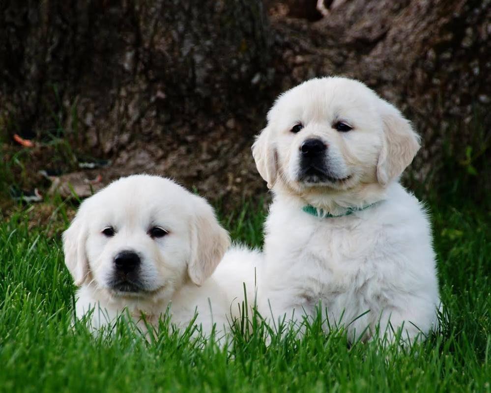 puppies_2_orig.jpg
