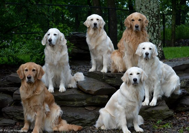dogs for website may 31 2017-crop.jpg