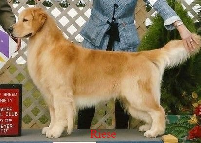 riese-2_1.jpeg