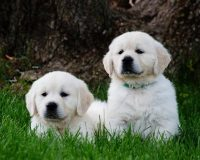 puppies_2_orig.jpg