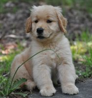puppyaboutus.jpg