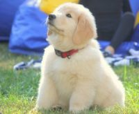 teddy-pup-three-300x248.jpg