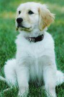 Hunny_Puppy.jpg