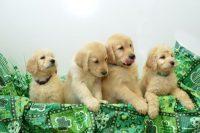 home_dogs.jpg